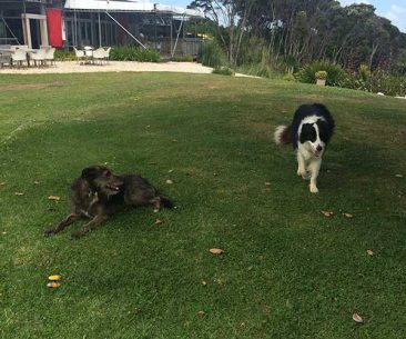 Dogs on Waiheke Island
